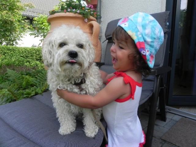 Teddy-Bolonka-Zwetna-aus-Bergern